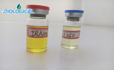 China Label Customized Service, Filtered Testosterone Acetate 80mg/ml steroids Liquids distributor